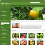 果园网站(英文)模板